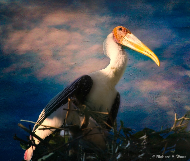 Newly Nested Painted Stork