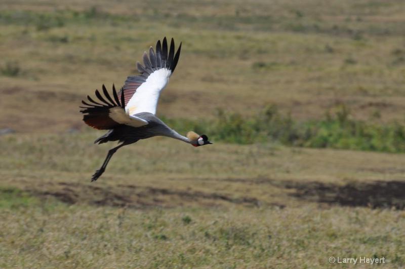 Ngorongoro Crater- Tanzania