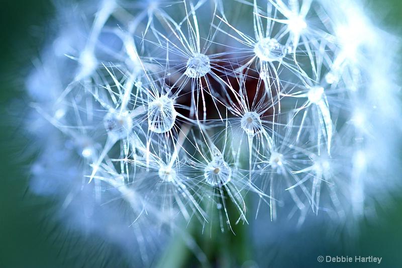 Dandelion Bling