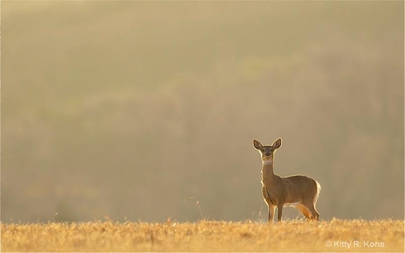 Deer on the Horizon