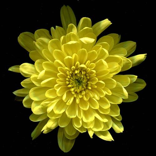 yellow on black 3