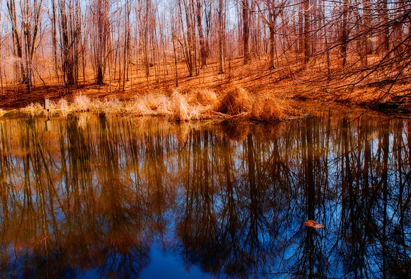 A Pond In The Woods