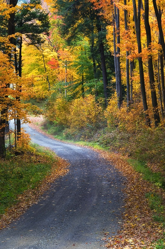 Pennsylvania Back Road