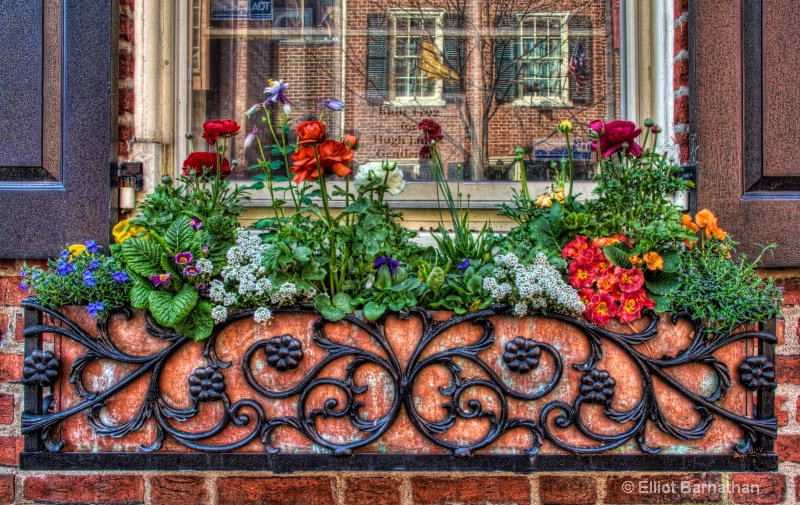 Window Boxes in Philly 4