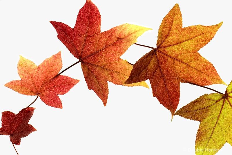 Rainbow of Autumn Leaves