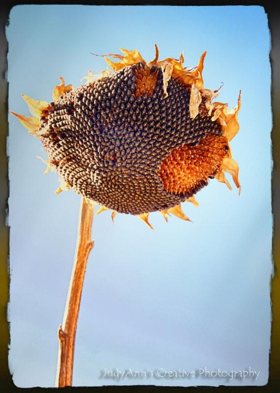 Sun Seeds