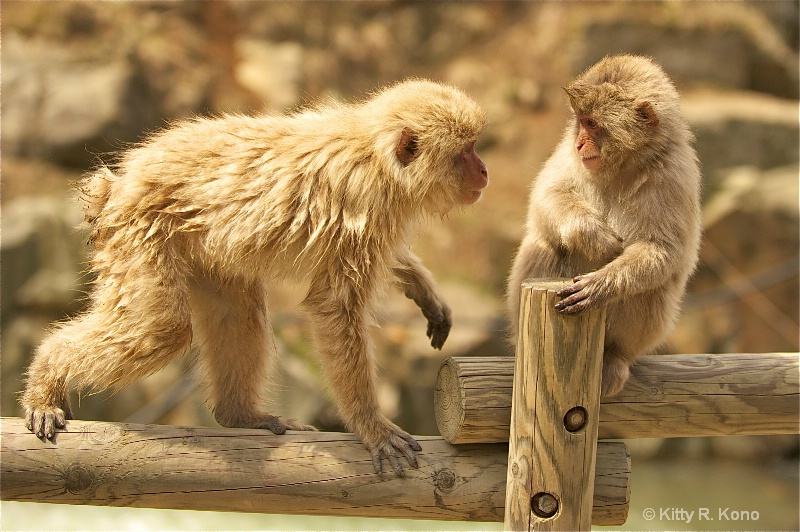 eleven monkey