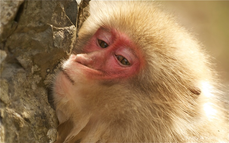 seven monkey