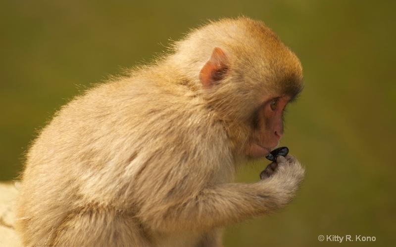 six monkey