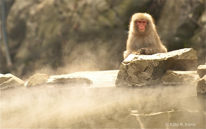 thirteen monkey