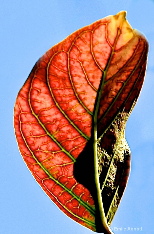 Ambient lite leaf