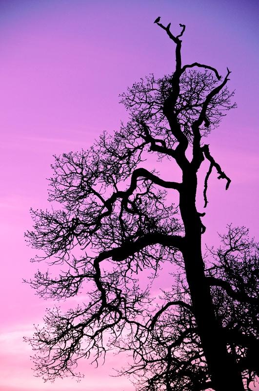 Raven Sunset