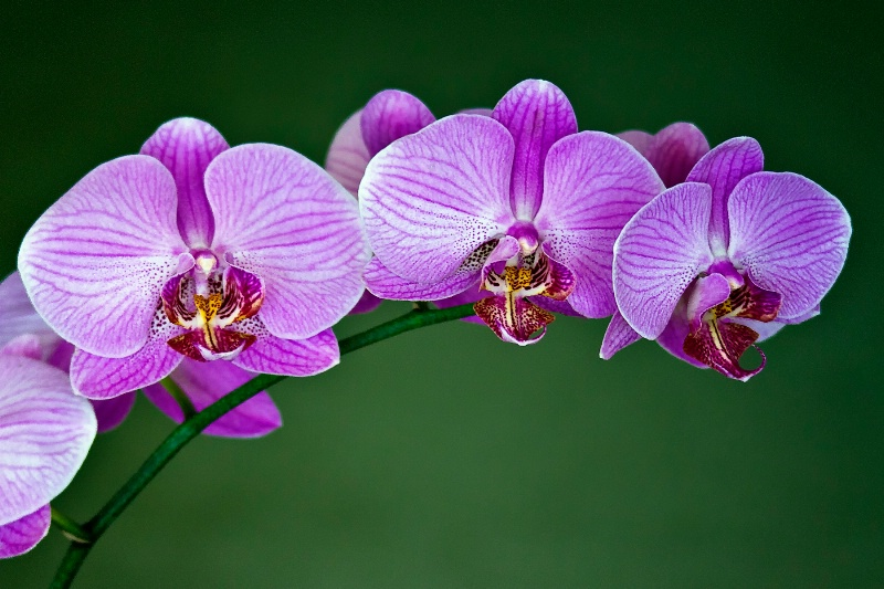 """My Orchid """"May"""""""