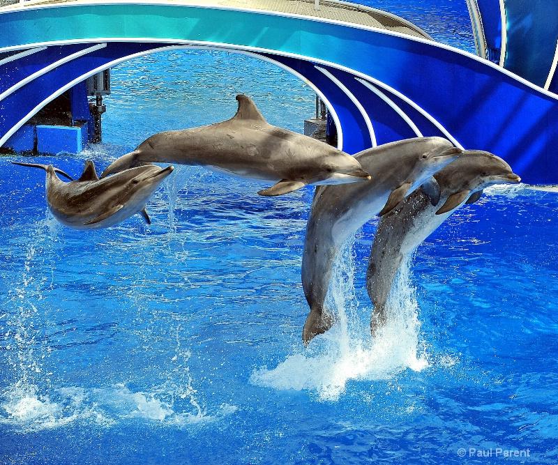 Sea World Dolphins