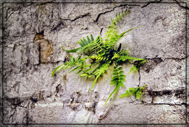 Nature Finds a Way