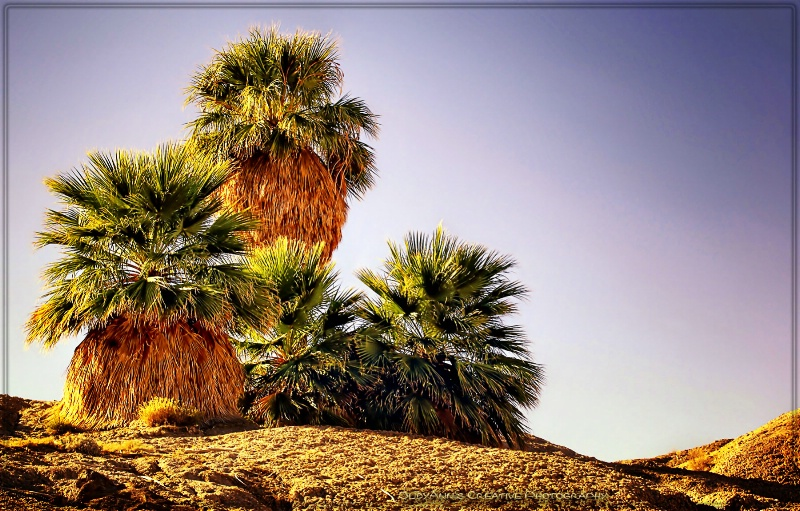 Palms... Only Natural in the Desert