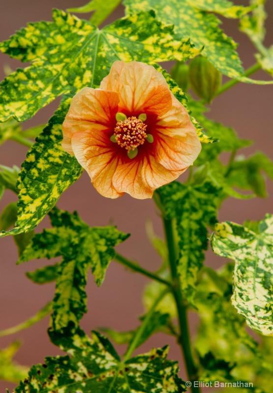 Summer Flowers 7