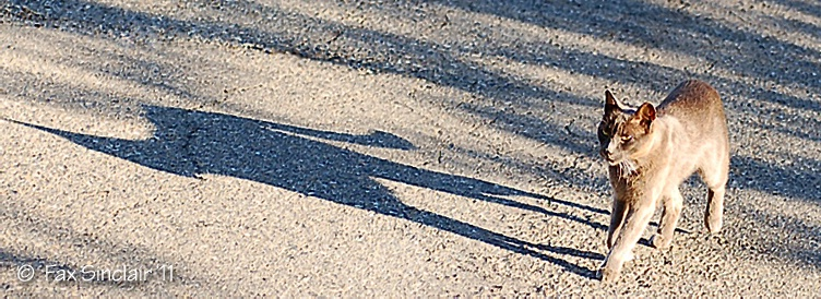 Graceson Walks