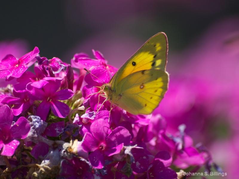 Sunlit Wings