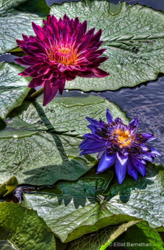 Lilly Garden in Forest Park 9