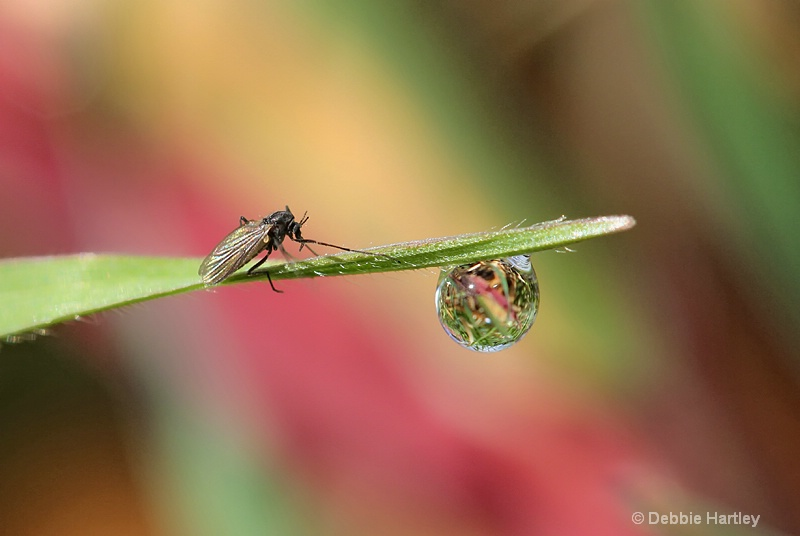 Insect and the water supply