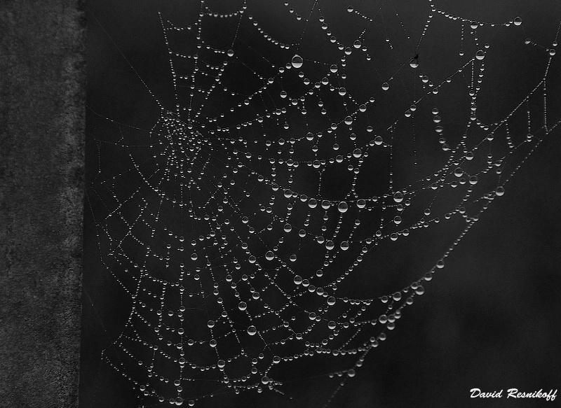 Drolplets in the Web