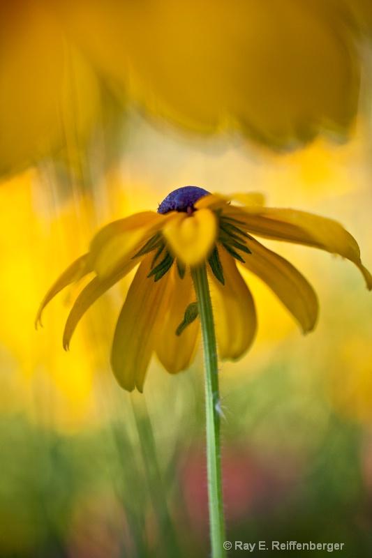 img 7128 Flower 11