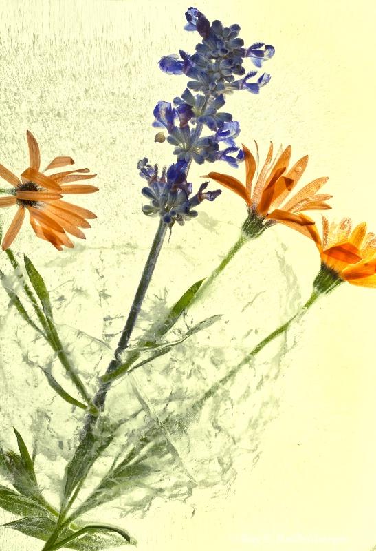 img 8709 Flower Ice