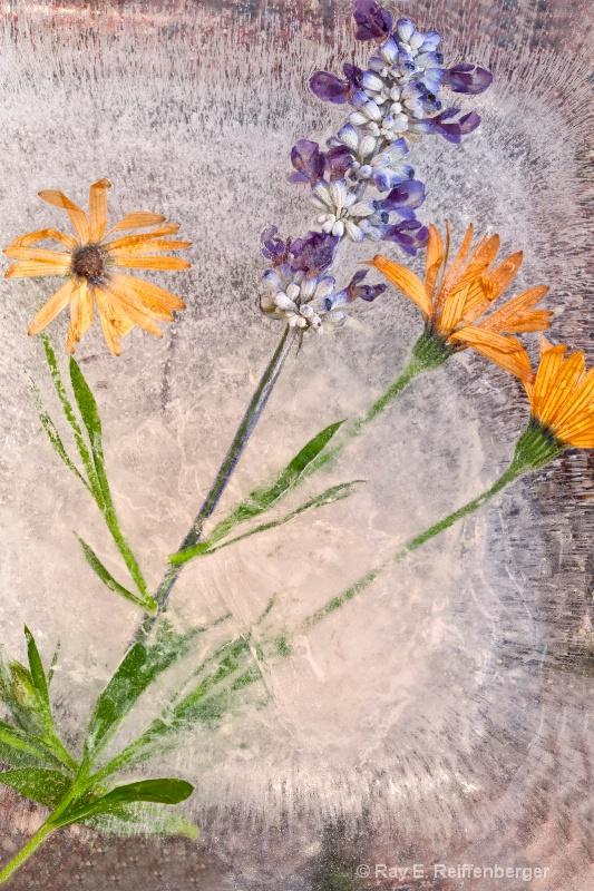 img 8731 Flower Ice