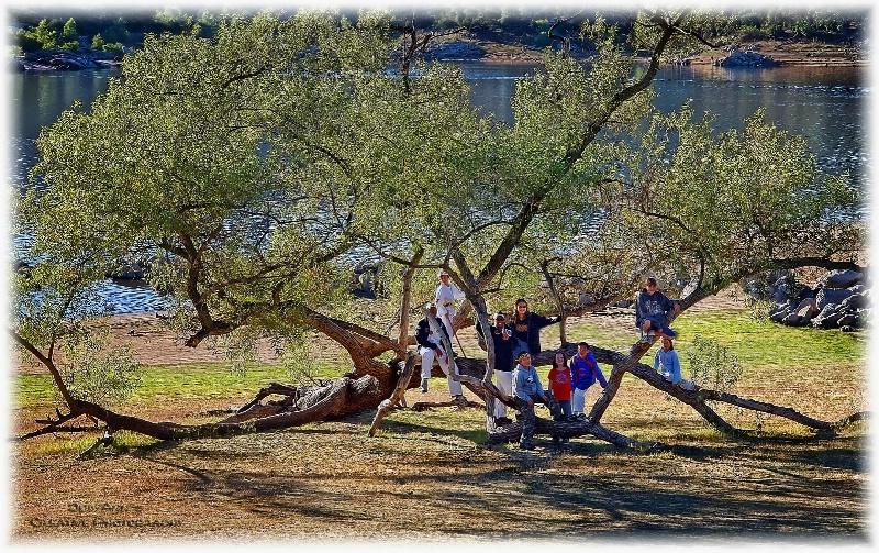 Tree Climbin' Fun in the Sun
