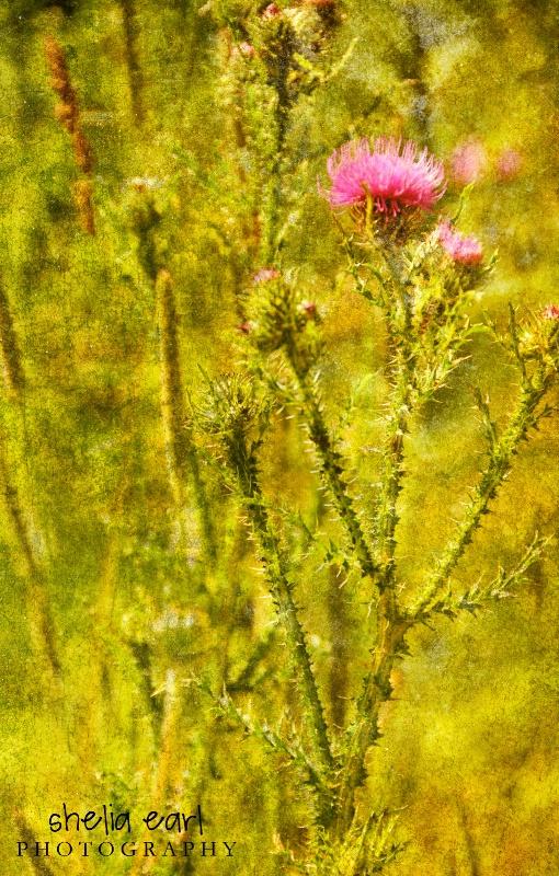 Weeds@@Textured