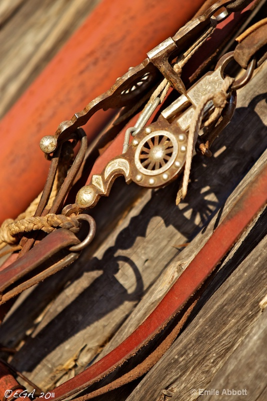 Horse tack and shadows on an angle