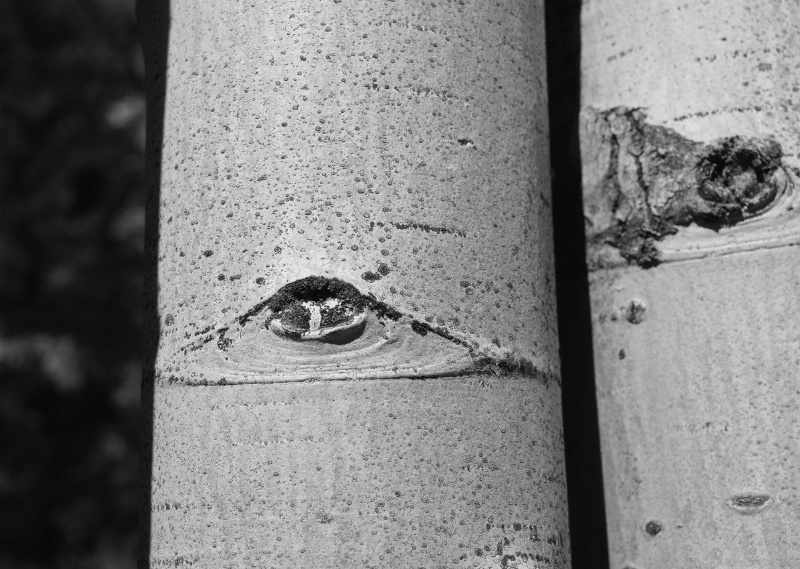 Eyes Are Watching You!