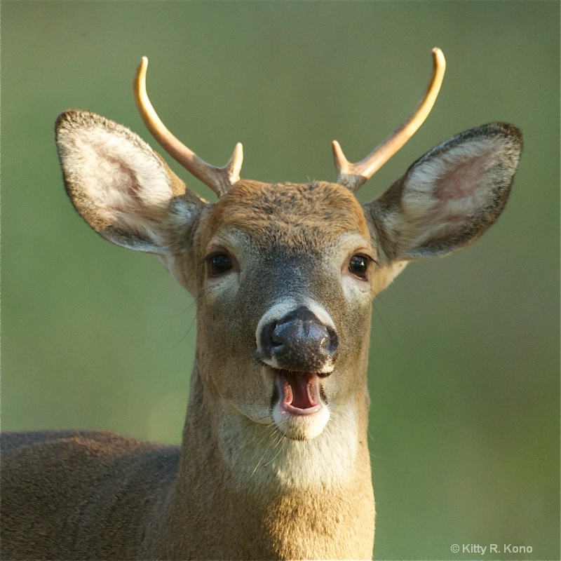 Hey - Are You Laughing At My Antlers?