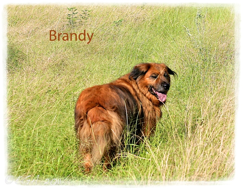 In memory of Brandy