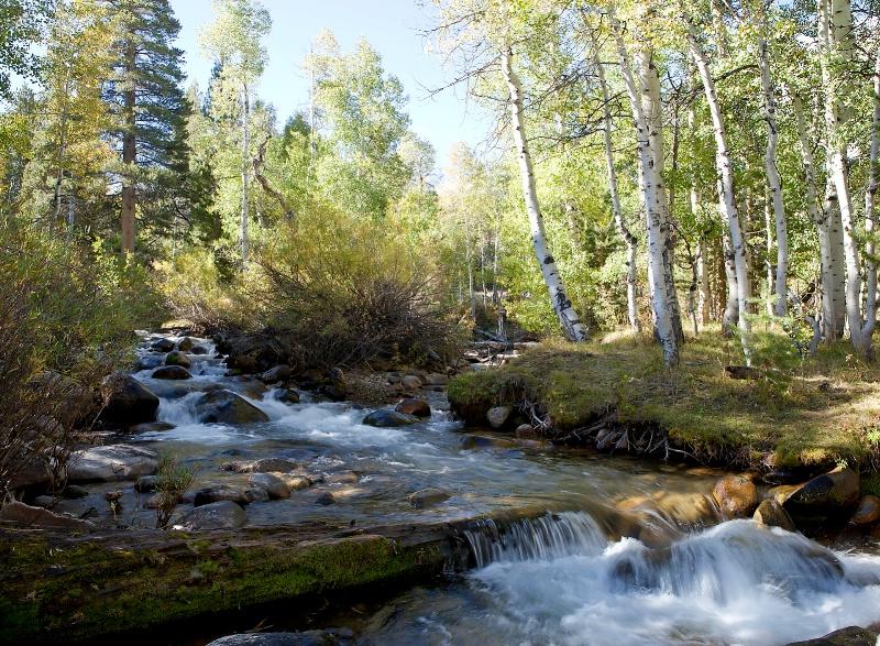 Little Walker River, Mono County, CA