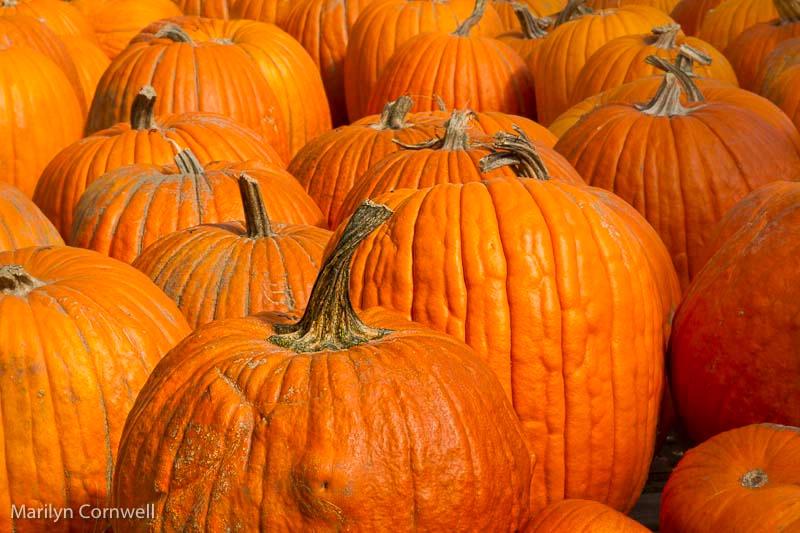 Another Pumpkin Patch