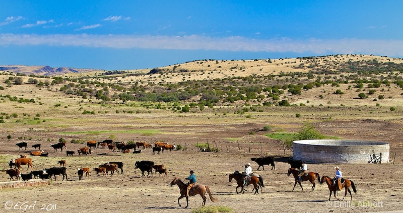 Cattle Corralled 06 Ranch
