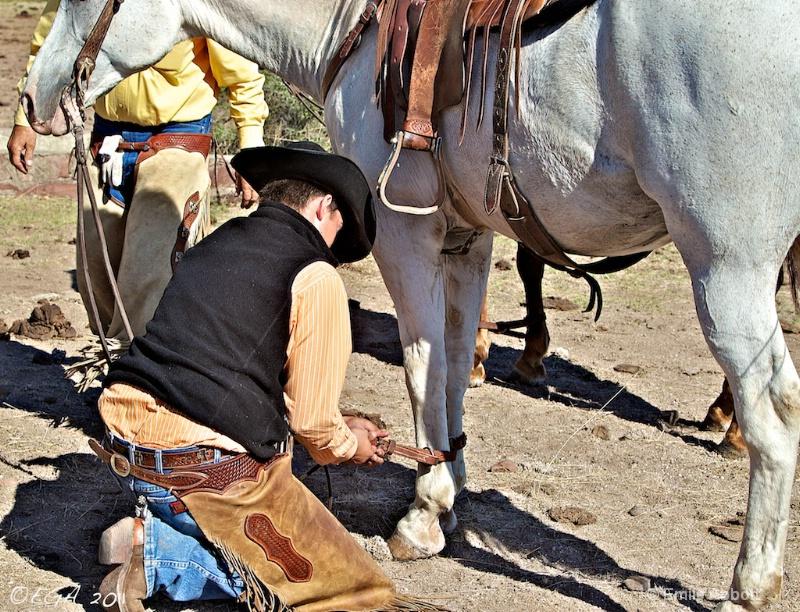 Hobbling the horse
