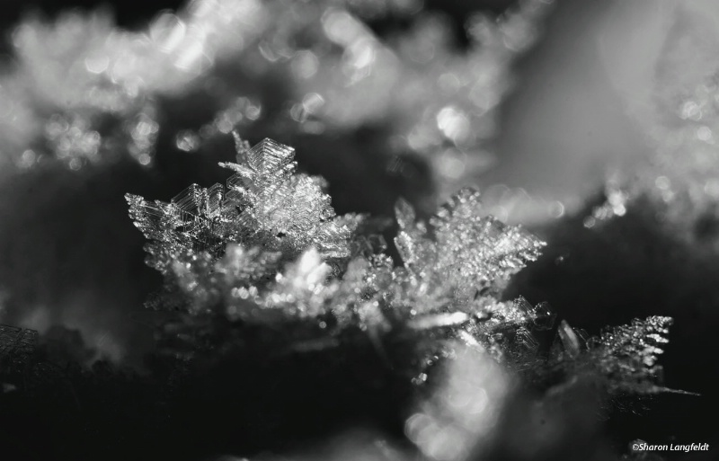 Ice Crystals in the Dirt