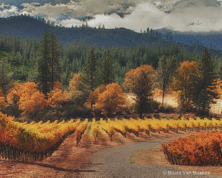 road vineyard