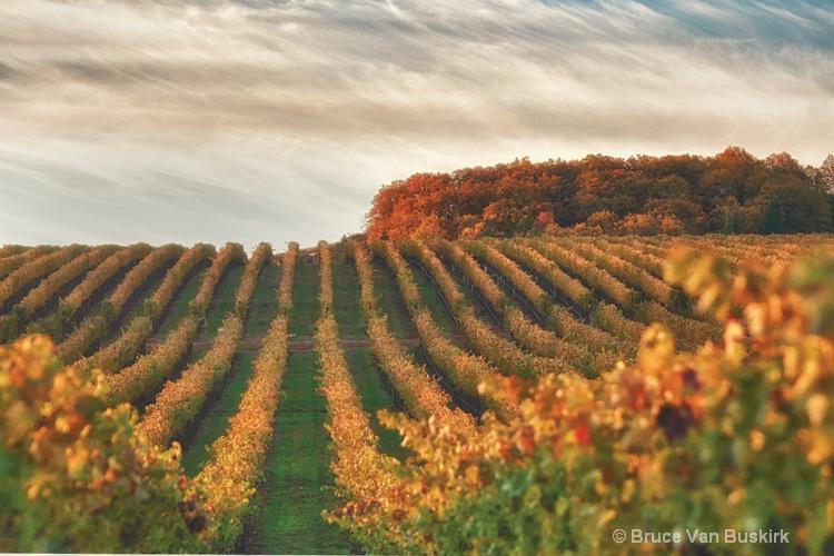 snow mountain vineyard