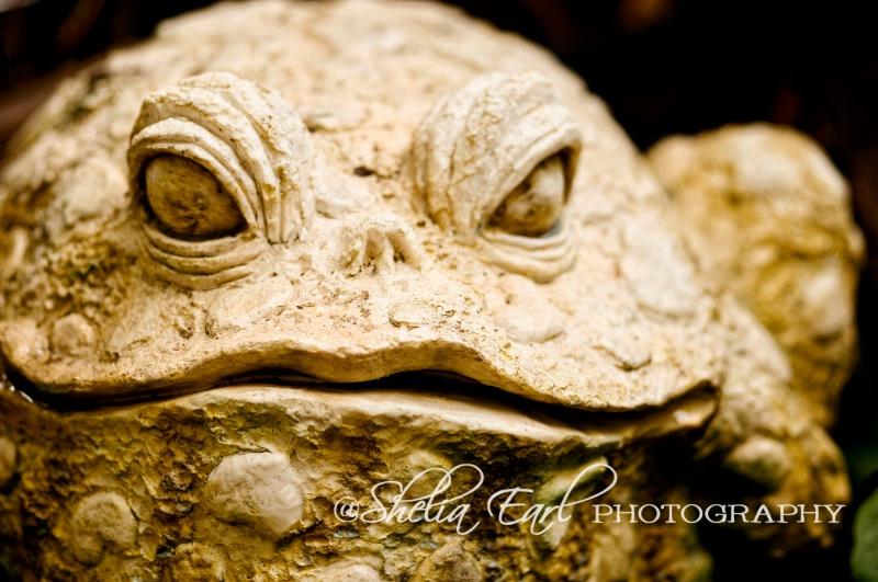 Cement Bullfrog