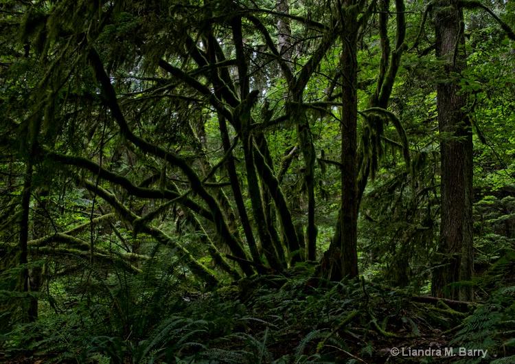 Vancouver rainforest
