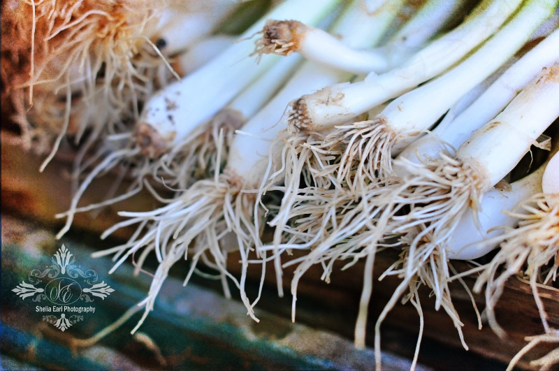 Market Onions