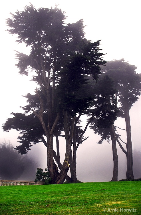 Foggy Vista with Green