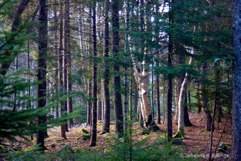 More Enchanted Woods