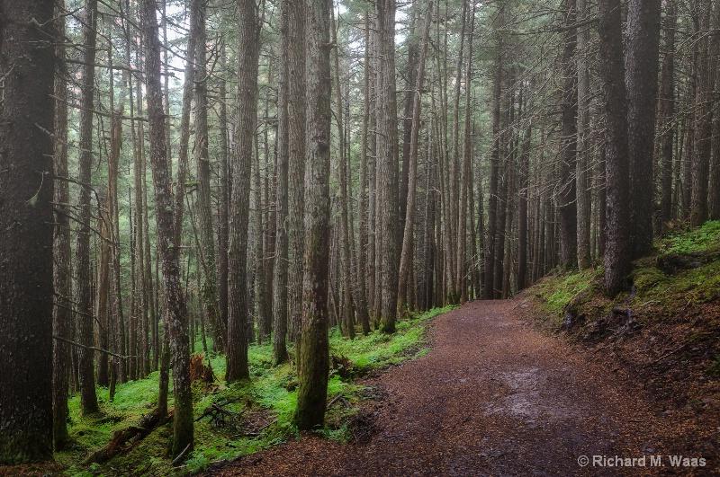 Hiking the Winner Creek Gorge Trail