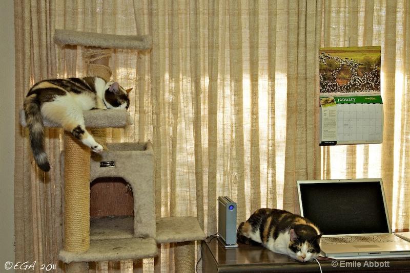 Office Kitties (Alice & Annie)