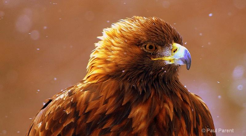 Winter Eagle